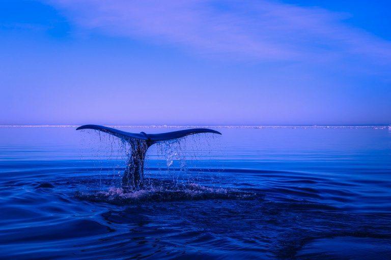 ossigeno prodotto dagli oceani