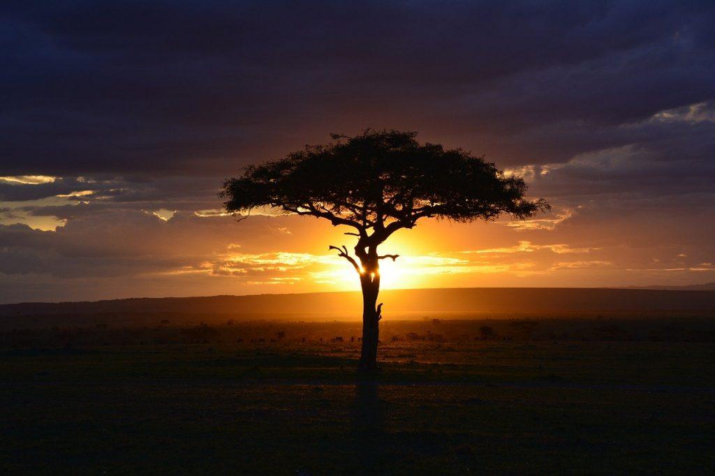 adotta un albero