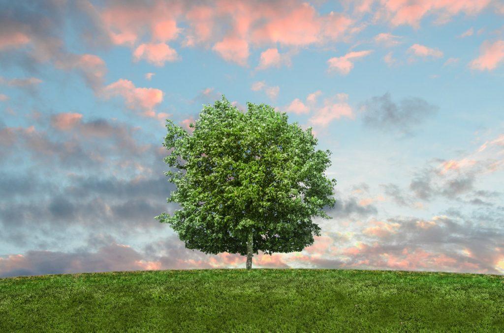 regalare un albero